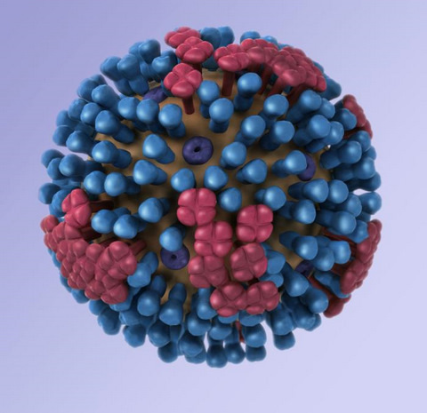3D Graphical Representation of a Generic Influenza Virion