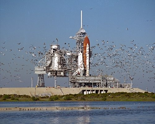 Flock of Birds Near the Space Shuttle