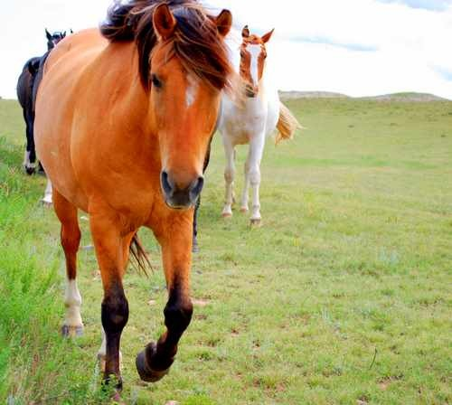 Equine Photo of Horse Walking Toward Camera