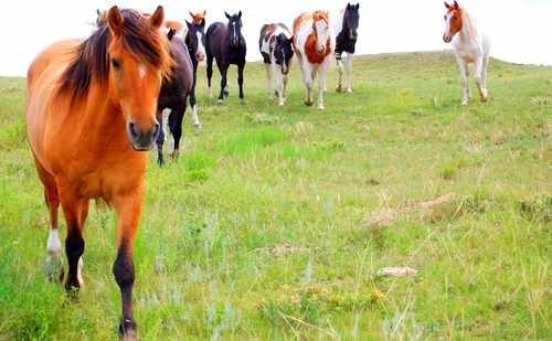 Horse Stock Photo - Many Horses in a Pasture