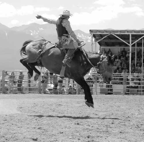 Rodeo Photo of  Cowboy on a Bucking Horse