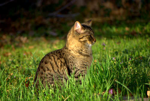 Photo of Brown Tabby Cat in Grass