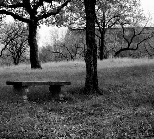 Cement Bench in the Woods