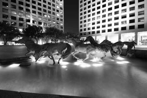 Stock Photo of the Horses of Las Colinas