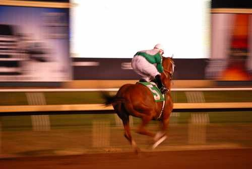 Quarterhorse Race Horse Stock Photo