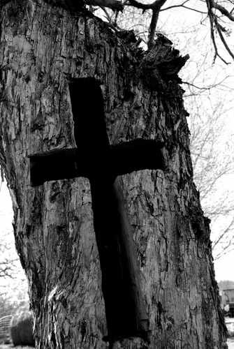 Picture of a Unique Cross Carved in a Tree
