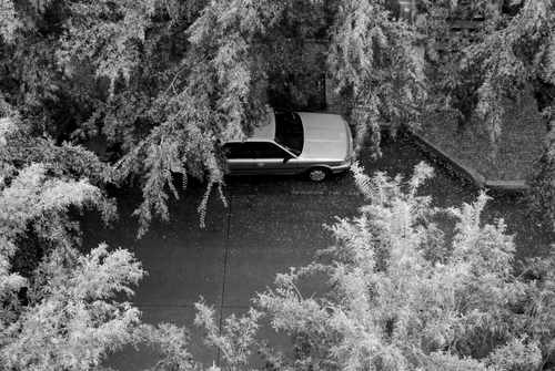 Aerial View of a Parked Car (with trees)
