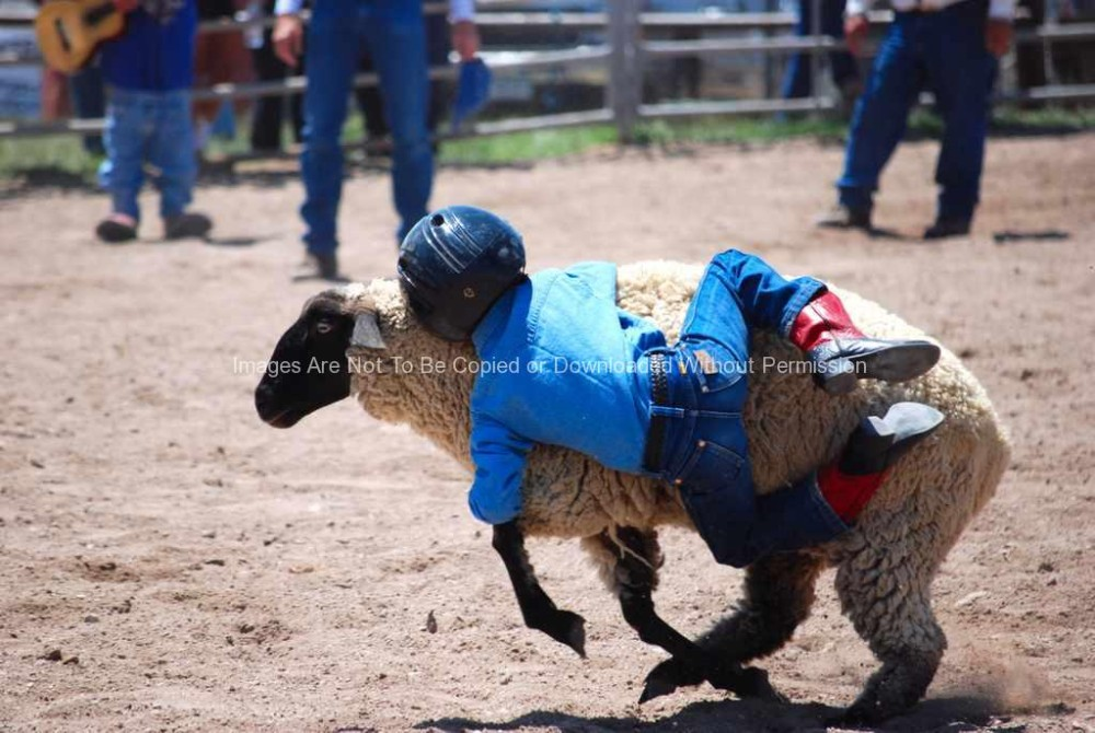 Little Cowboy Mutton Busting at a Small Town Rodeo