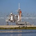 Flock-of-Birds-Near-the-Space-Shuttle