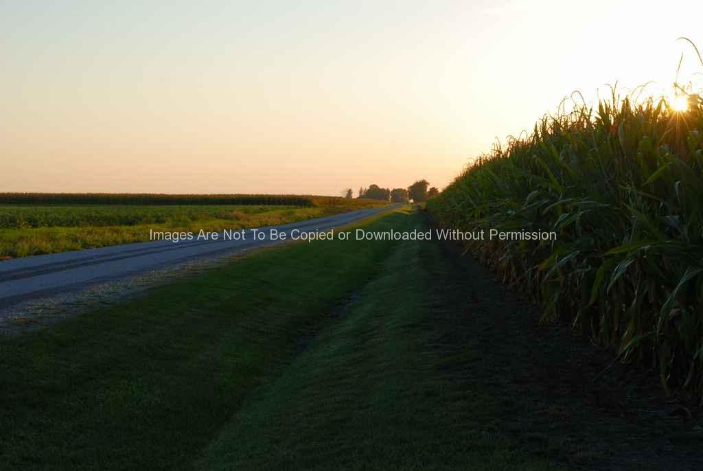 County Road and Corn-001